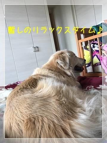 ブログIMG_1876-s-20180529こぴ.JPG