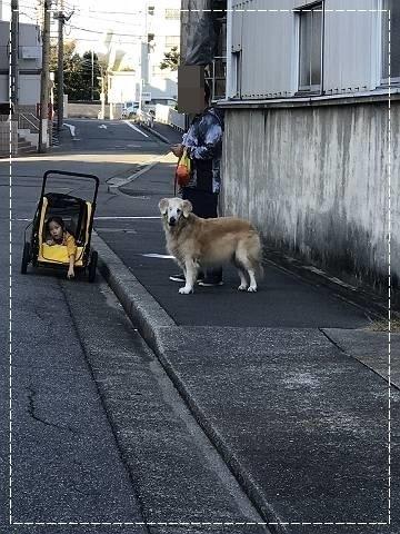 ブログIMG_2288-s-20181107こぴ.JPG