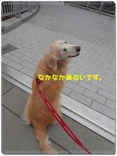 ブログP3040007-s-20180310こぴ.JPG