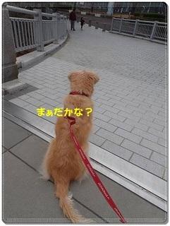 ブログP3040009-s-20180310こぴ.JPG