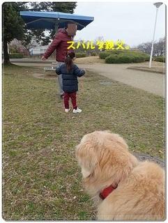 ブログP3040016-s-20180310こぴ.JPG