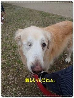 ブログP3040017-s-20180310こぴ.JPG