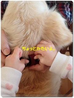ブログP3110042-s-20180311こぴ.JPG