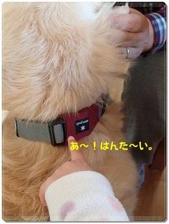 ブログP3110043-s-20180311こぴ.JPG