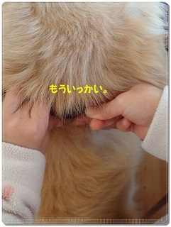 ブログP3110044-s-20180311こぴ.JPG