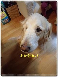 ブログP3120031-s-20180312こぴ.JPG