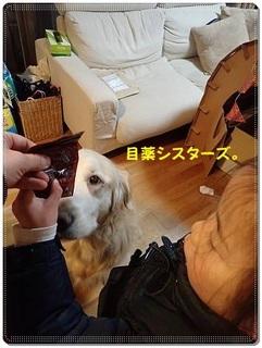 ブログP3120034-s-20180312こぴ.JPG