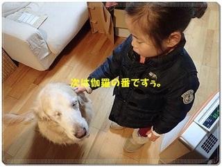 ブログP3120039-s-20180312こぴ.JPG
