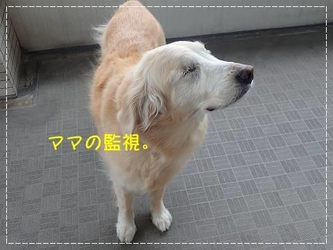 ブログP4060007-s-20180505こぴ.JPG