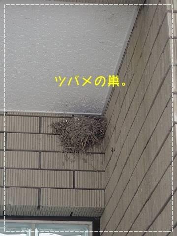 ブログP4270002-s-20180430こぴ.JPG