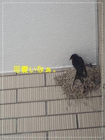ブログP4270013-s-20180430こぴ.JPG