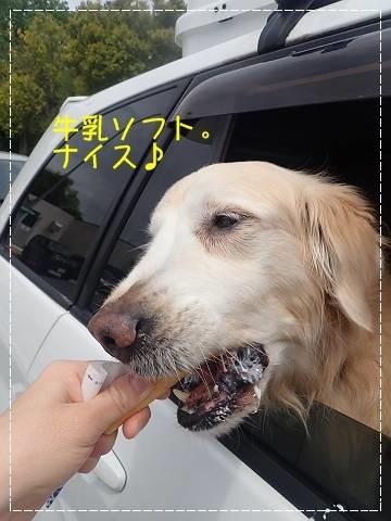 ブログP4270024-s-20180430こぴ.JPG