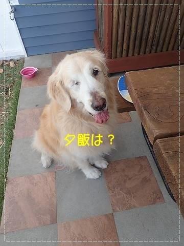 ブログP4270027-s-20180430こぴ.JPG