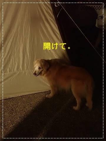 ブログP4280128-s-20180502こぴ.JPG