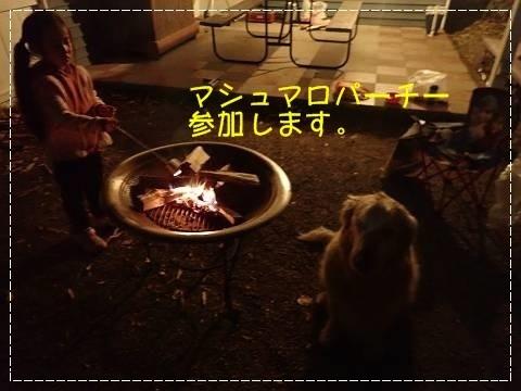 ブログP4280142-s-20180502こぴ.JPG