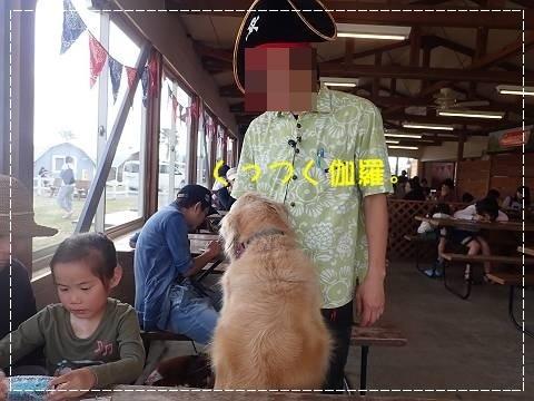 ブログP4290168-s-20180502こぴ.JPG