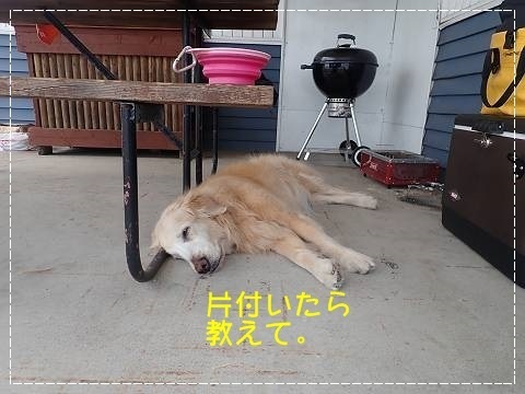 ブログP4300182-s-20180502こぴ.JPG