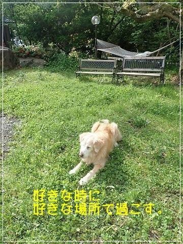 ブログP5040031-s-20180508こぴ.JPG