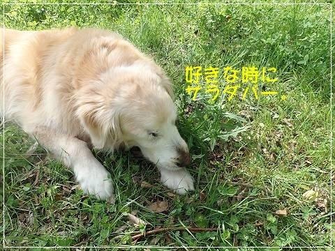 ブログP5040034-s-20180508こぴ.JPG