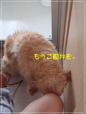 ブログP5060018-s-20180512こぴ.JPG