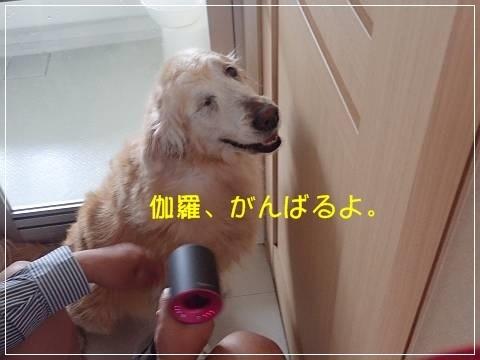 ブログP5060020-s-20180512こぴ.JPG