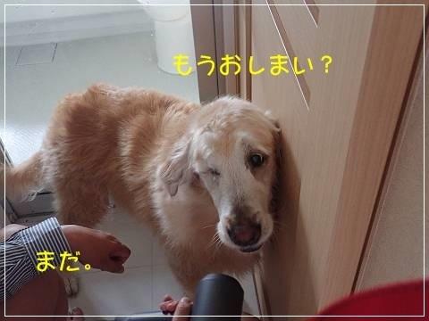 ブログP5060023-s-20180512こぴ.JPG