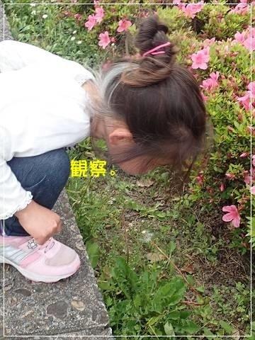 ブログP5120049-s-20180515こぴ.JPG