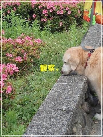 ブログP5120050-s-20180515こぴ.JPG
