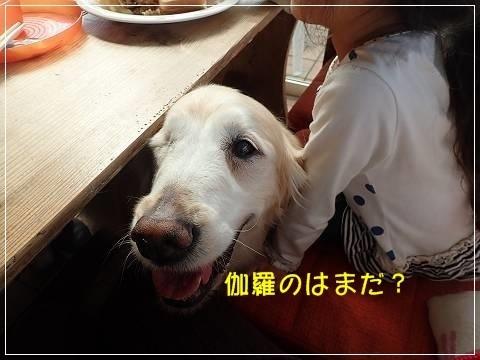 ブログP5120065-s-20180514こぴ.JPG