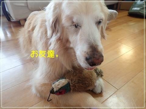 ブログP5130009-s-20180516こぴ.JPG