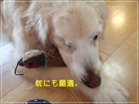 ブログP5130019-s-20180516こぴ.JPG