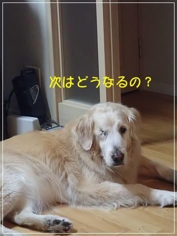 ブログP5160001-s-20180517こぴ.JPG