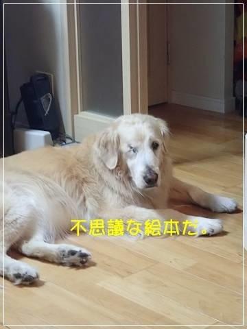 ブログP5160005-s-20180517こぴ.JPG