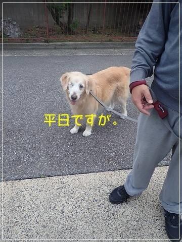ブログP5170001-s-20180518こぴ.JPG