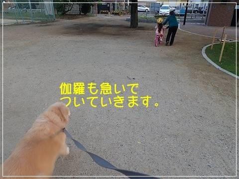 ブログP5170011-s-20180518こぴ.JPG