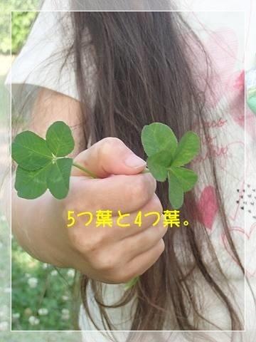 ブログP5270041-s-20180604こぴ.JPG