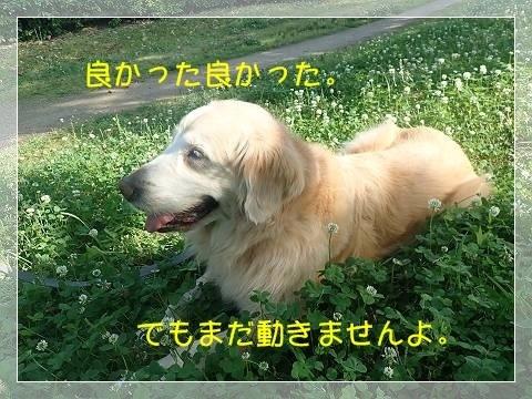 ブログP5270042-s-20180604こぴ.JPG