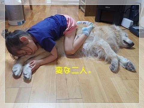 ブログP5280011-s-20180602こぴ.JPG
