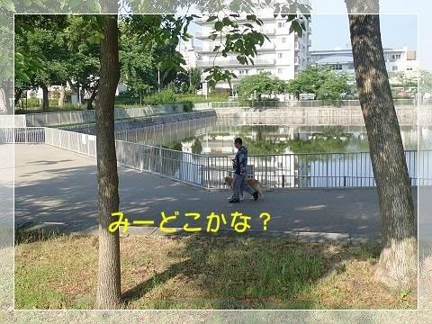 ブログP6020020-s-20180605こぴ.JPG