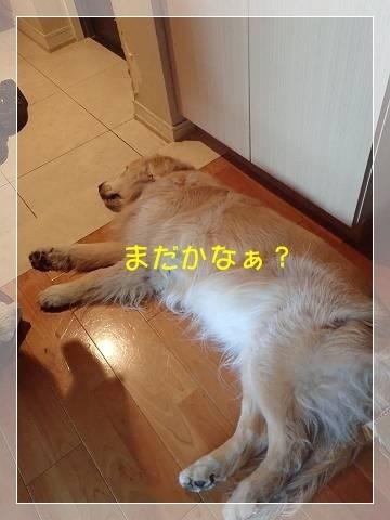 ブログP6030063-s-20180603こぴ.JPG