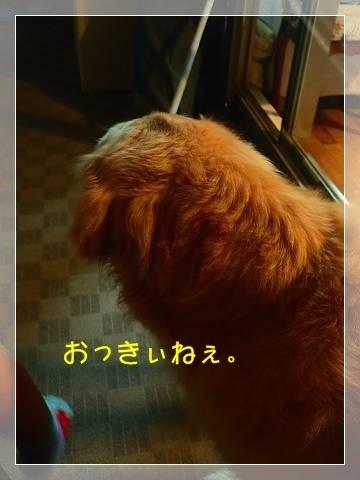 ブログP6050014-s-20180606こぴ.JPG