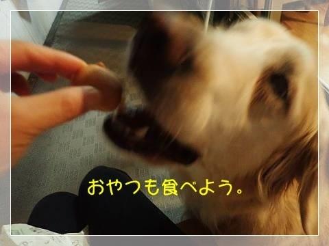 ブログP6050041-s-20180606こぴ.JPG