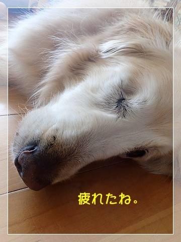 ブログP6090010 (2)-s-20180610こぴ.JPG