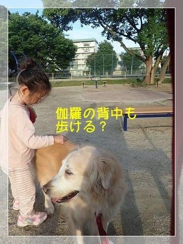 ブログP6140015-s-20180615こぴ.JPG