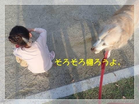 ブログP6140020-s-20180615こぴ.JPG