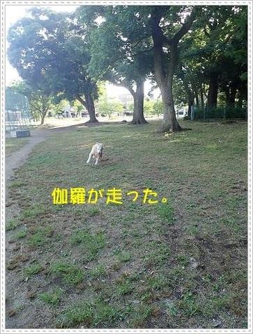 ブログP6160011-s-20180619こぴ.JPG