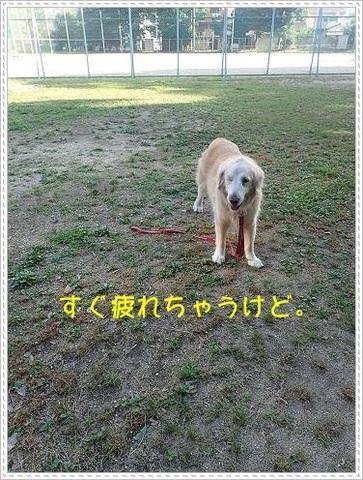 ブログP6160016-s-20180619こぴ.JPG