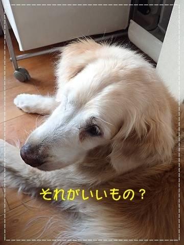 ブログP7120025-s-20180713こぴ.JPG