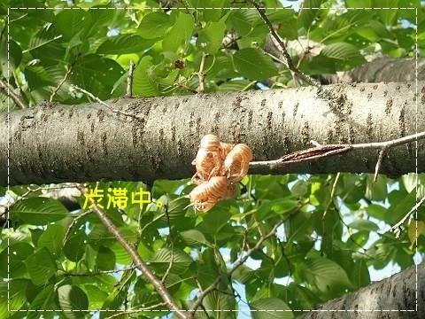 ブログP7140088-s-20180714こぴ.JPG