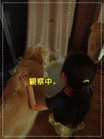 ブログP7140089-s-20180714こぴ.JPG